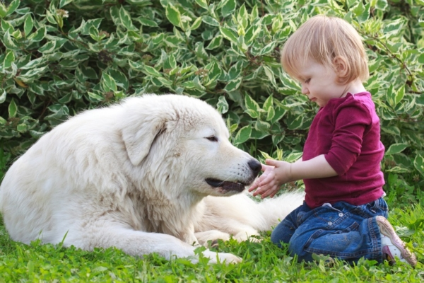 Dog Bite Prevention Tips for Kids