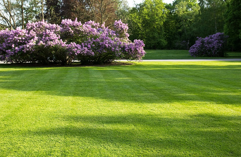 Early Spring Lawn Care Tips Contractor Quotes