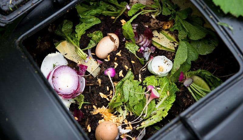 look inside a container with organic waste