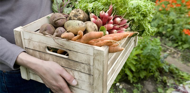 person holding box of vegetables