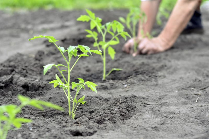 plants being planted