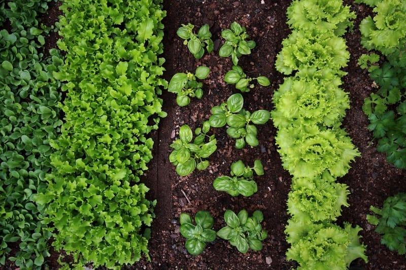 vegetable garden seen from above