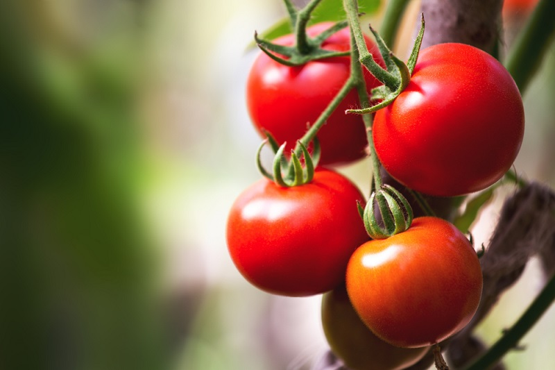 tomatoes are good for dry skin