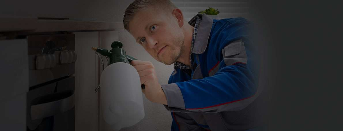 Best Local Exterminators And Fumigators Near Me Free
