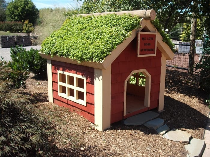 green doghouse