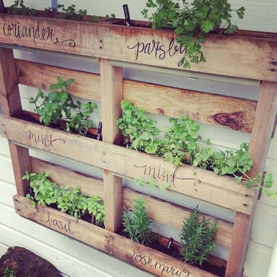 herbs being grown in a pallet