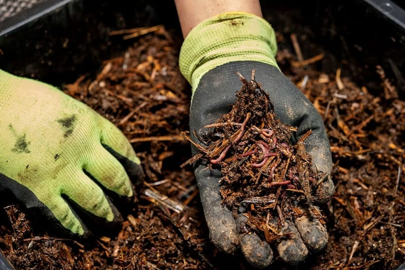 man holding up soil with worms in it