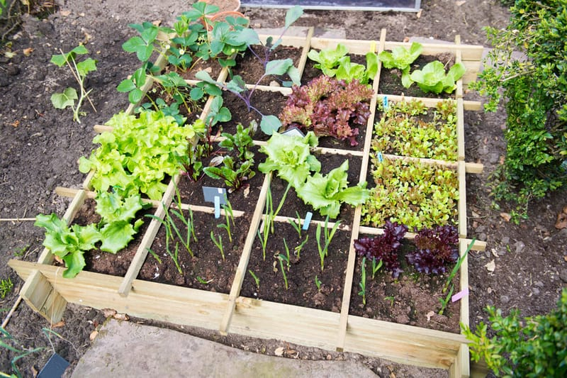 vegetable garden in wooden frame