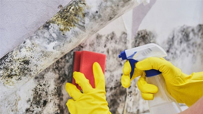 mold being removed