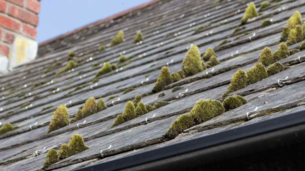 How To Remove Algae And Moss From Your Roof Amp Free Cost