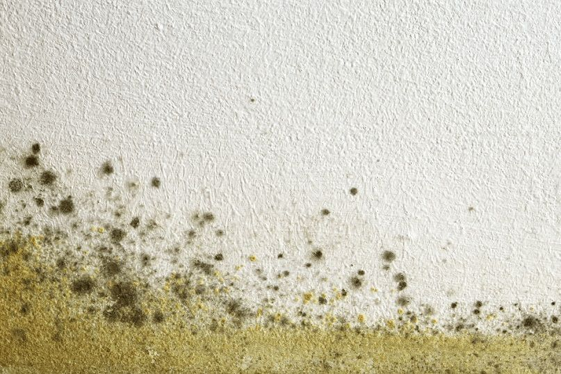 mold on a wall