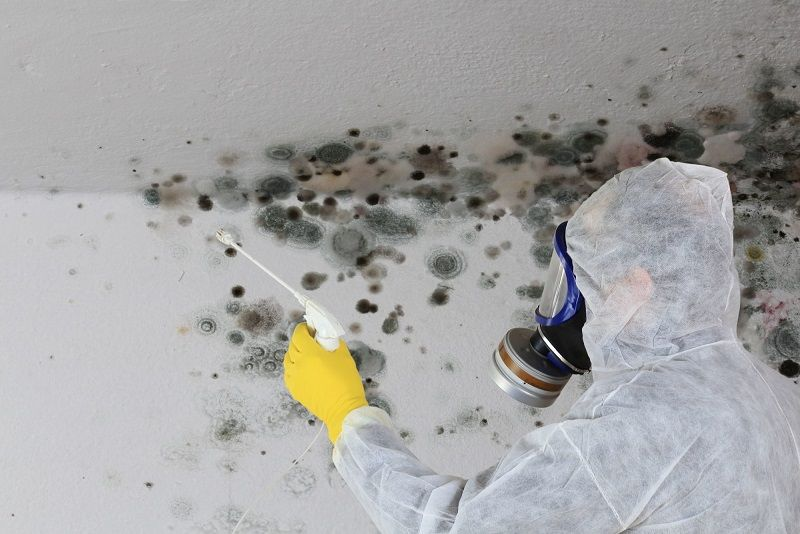 professional dealing with mold